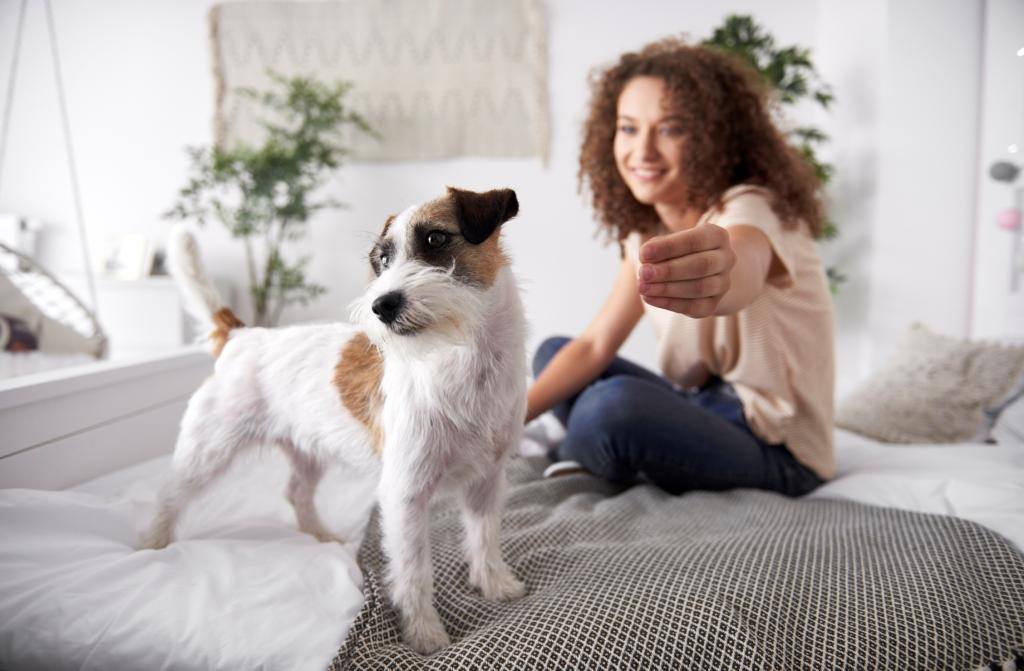 Cute dog on the bed in bedroom