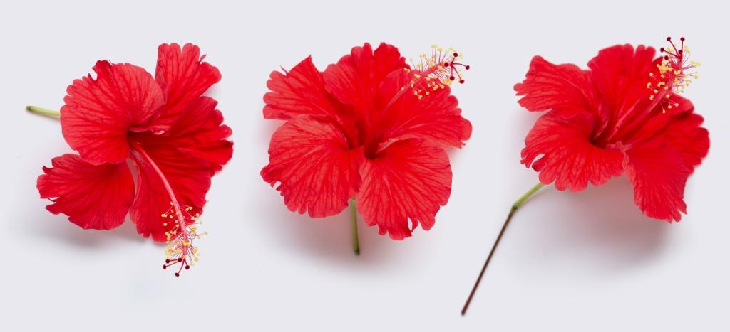 Amazing Ways To Use Hibiscus For Hair